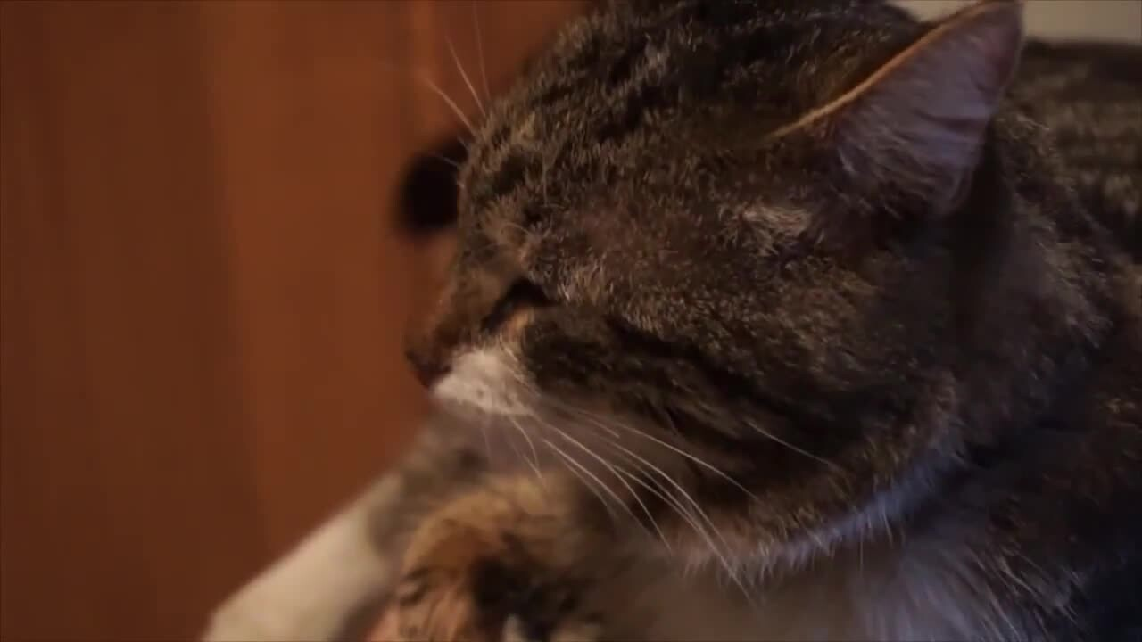 Гифка плачущая кошка